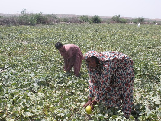 Melon growing family missed by vaccination campaigns highlights the necessity of improving micro plans. UNICEF / Pakistan