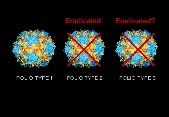 Two of the three strains of poliovirus left may have now been eradicated for good.